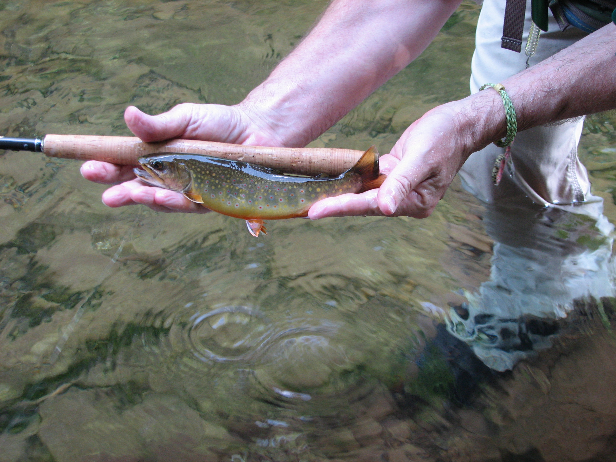 Clear the Air, Save a Brook Trout