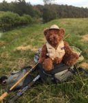 Willie Bear